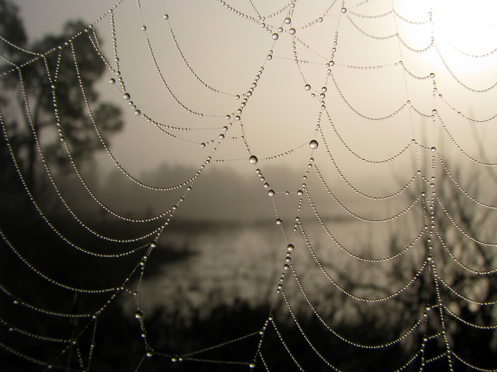 Spider's Morning by Rebecca Cruz