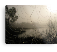 Spider's Morning Metal Print