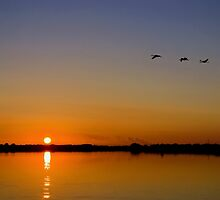 Cranes Flying Over Horsey Mere by Alex Wagner
