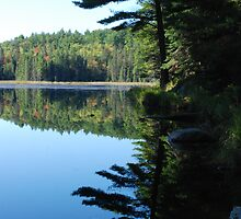 Reflections at Beaver Pond by bertspix