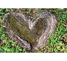 Rooted in Love II Photographic Print