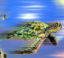 Terrapin Time by Melissa Krumpe