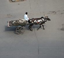 Bullock cart on Mumbai city roads transporting ice, India by SheriarIrani
