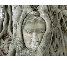 Ayutthaya Buddha Head Photographic Print