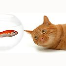Mug - cat and fish by © Kira Bodensted