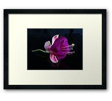 Fuchsia V Framed Print
