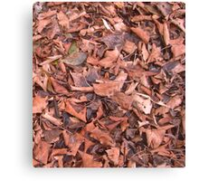 Autumn Leaves... Canvas Print