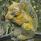 Lichen Squirrel. by TimHatcher