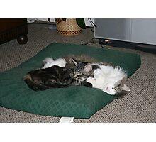 Snuggle Buddies Photographic Print