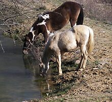 horses at pond by Lorrie