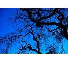 Oak trees Photographic Print