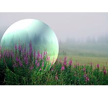 Fireweeds in the mist Photographic Print
