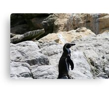 Humbold penguin Canvas Print