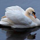 Mute Swan by Margaret Barry