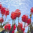 Reflected Tulips by Tom Vaughan