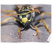 Winter Wasp ! Poster