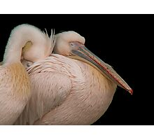 Snuggle up Photographic Print