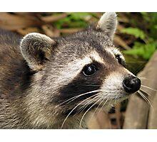 Little Bandit Photographic Print