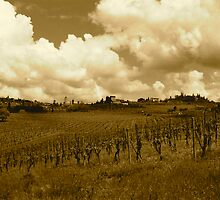 Tuscan Vineyard, Chanti, Italy by Lisa Wilson