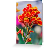 Canna Spectacle Greeting Card