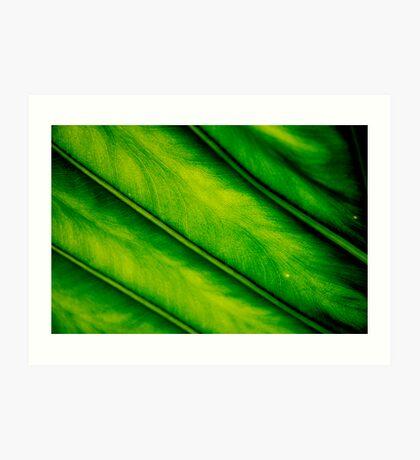 Close Up To Nature Art Print