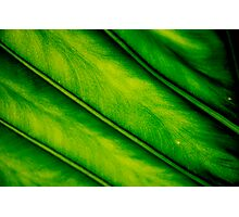 Close Up To Nature Photographic Print
