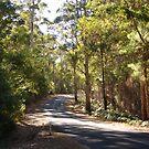 Road through a forest by georgieboy98