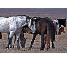 Loving Wild Mustangs Photographic Print