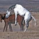 Happy Mustangs by Judson Joyce