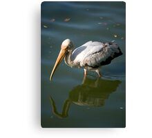 Bird walking through water Canvas Print