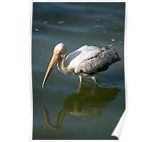 Bird walking through water Poster