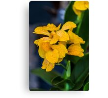 Orchid Vanda Yellow Canvas Print