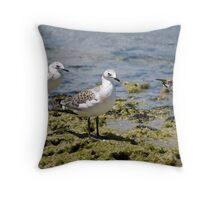 Seagulls on Rocks Throw Pillow