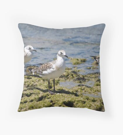 Seagulls on Rocks Throw Pillow