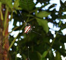 Spiny Spider by xXDarkAngelXx