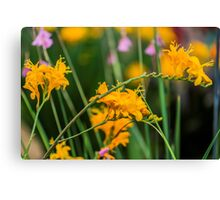 Crocosmia Summer Spectacle Canvas Print