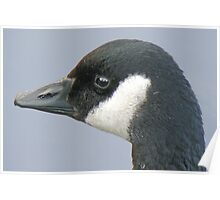 A Noble Head - Canada Goose Poster