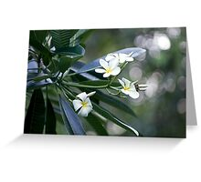 Evergreen Offerings Greeting Card