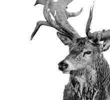 Red Deer - Portrait by George Wheelhouse
