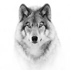 Timber Wolf in B&W by Jim Cumming