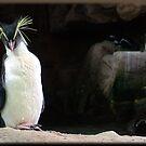 Pretty Penguin by Chris Coetzee