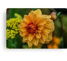 Dahlia Orange Flame Canvas Print