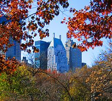 Central Park New York City photography by Vitaliy Gonikman