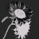 White on Black by heatherfriedman