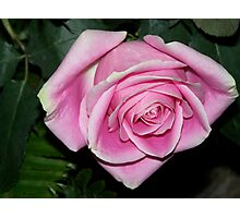 Rose Pink Photographic Print