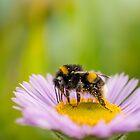Bee at Work by George Wheelhouse