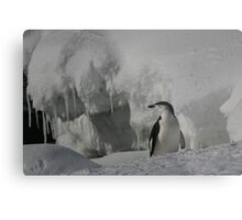 Antarctic Penguin Metal Print