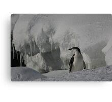 Antarctic Penguin Canvas Print