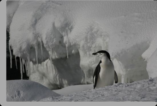 Antarctic Penguin by Carolyn Ng