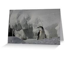 Antarctic Penguin Greeting Card